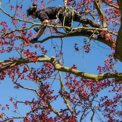 Quercus Boomexperts is een klant van Qooling